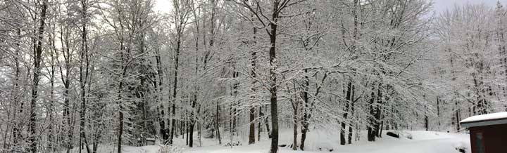 Winter wonderland in the forest behind the Birch Ridge Inn at Killington.