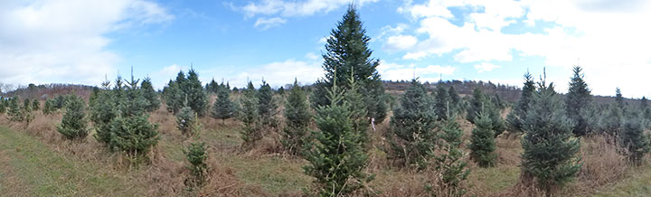 Birch Ridge Inn Christmas tree found and tagged