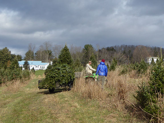 Hauling the tree out of the forest.