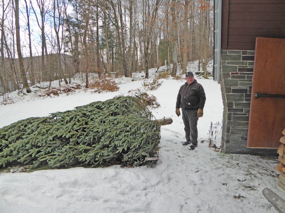 The Birch Ridge Inn Christmas tree unwrapped before bringing it into the inn.  Froggy standing by to help haul it in.