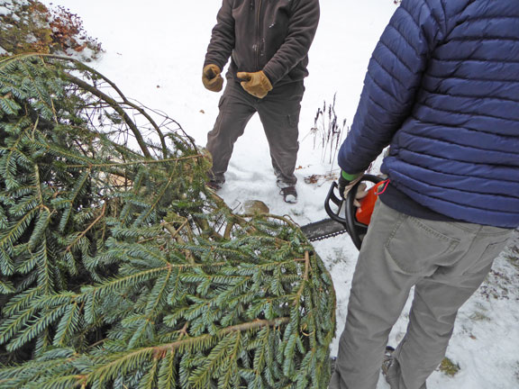 A little tree surgery to get the Birch Ridge Inn tree to fit into the inn.
