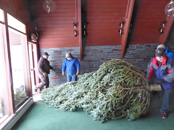 Sometimes it all boils down to muscle.  Hauling the tree into the inn.