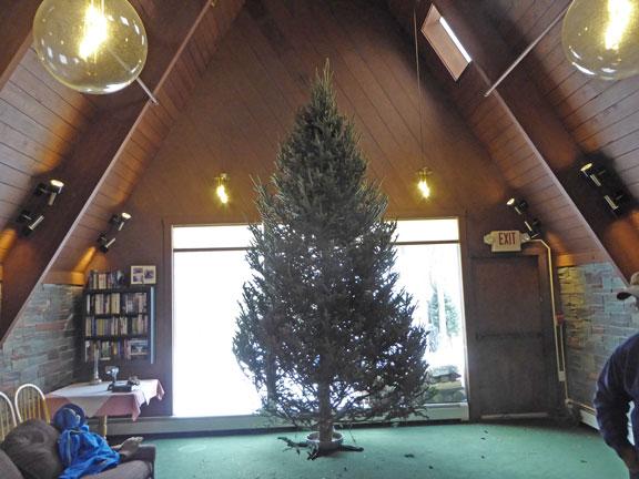 The Birch Ridge Inn Christmas Tree.  Successfully raised on Christmas Tree Monday waiting to be decorated.